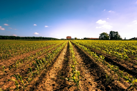 Field crops leading to a farm house Stock Photo