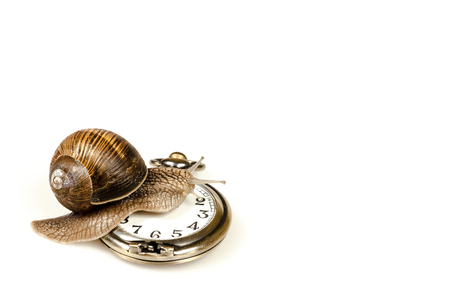 Escargot snail climbing on a vintage clock