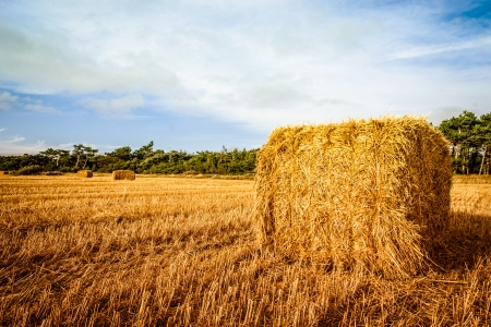 Straw bale on the field in sunshine photo