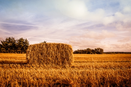 Straw bale on the field in sunshine Stock Photo