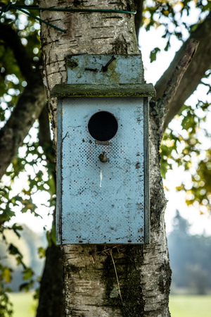 Old bird house hanging on a tree photo