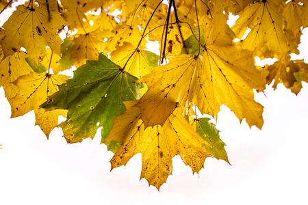 Automne leafson un arbre au moment de l'automne