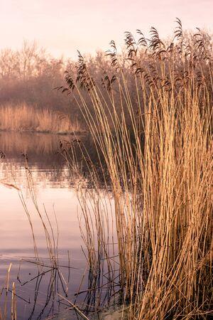 Small idyllic lake on a misty autumn morning