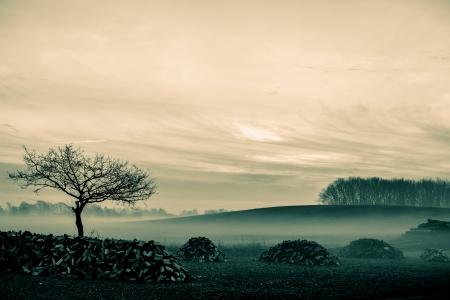 Magical matin brouillard feuillage sur un paysage magnifique campagne de paysages