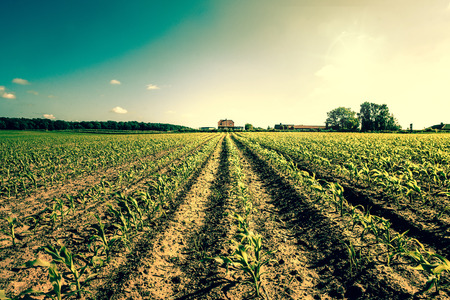 organic farming: High resolution photo in best quality