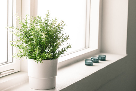 Pflanzen: Hochauflösendes Foto in bester Qualität
