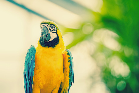 Beautiful macaw parrot in natural enviroment photo