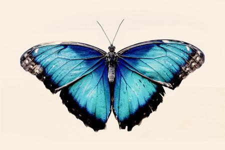 Belle papillon bleu aux ailes ouvertes