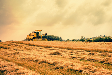 Harvester working on a dry field photo