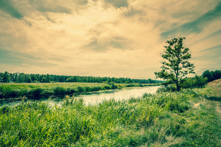 Beautiful river landscape with a lonely tree photo