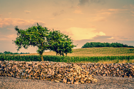 Beautiful tree growing from a pile of wood photo