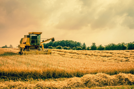 Big harvester machine on a countryside field photo