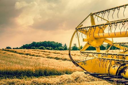 Harvester rear turning the hay photo