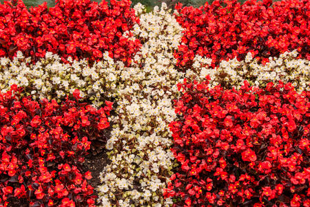 Red and white flowers illustrating the flag of denmark stock photo red and white flowers illustrating the flag of denmark stock photo 30829876 mightylinksfo