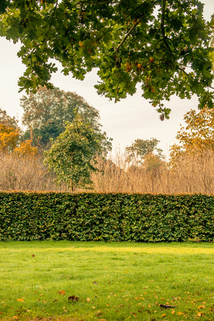 Hedge in a park at autumn