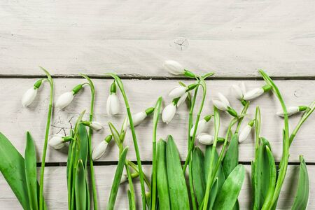brigh: Fresh snowdrop flowers on a brigh wooden background Stock Photo