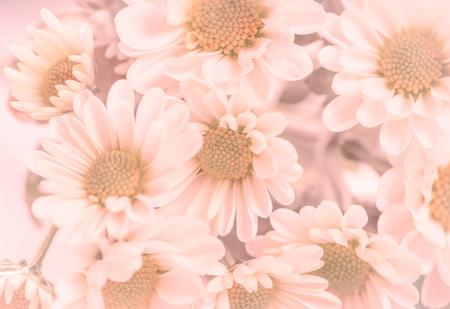 fleurs romantique: Fleurs romantiques avec un ton violet