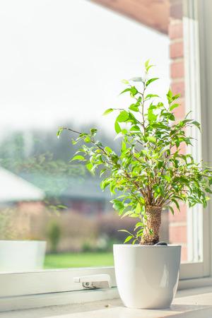 Small green tree in a window