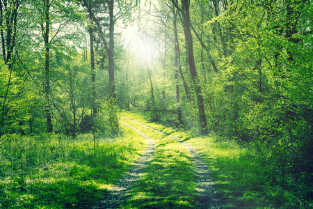Green forest in the spring with a road and sunshine