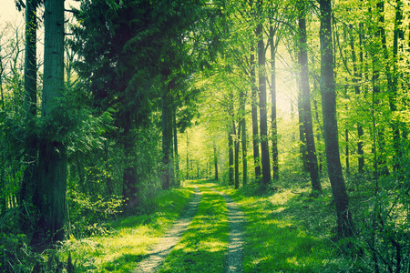 Path going through a green forest in the spring