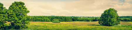 Panorama landscape with green grass and trees