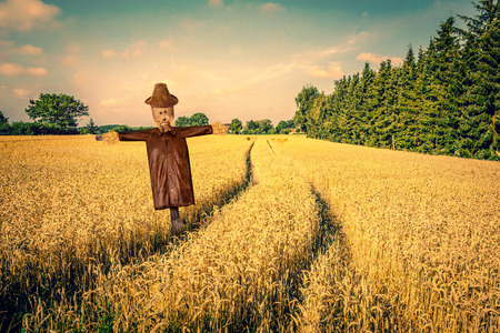Scarecrow in a countryside landscape with golden fields