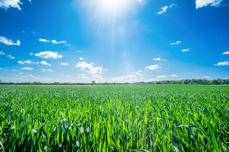 Countryside landscape with sunny weather