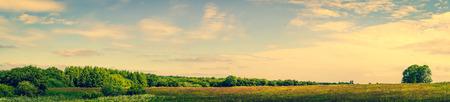 paisaje rural: Panorama del paisaje de una pradera con árboles verdes