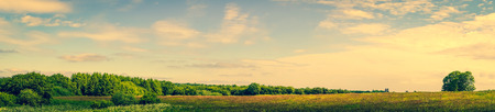 serene landscape: Panorama landscape of a prairie with green trees Stock Photo