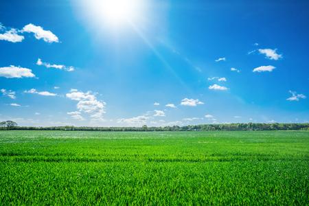 champ de paysage de campagne en �t�