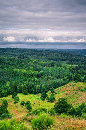Paysage avec des arbres de pin dans weatherr nuageux dans la nature danoise