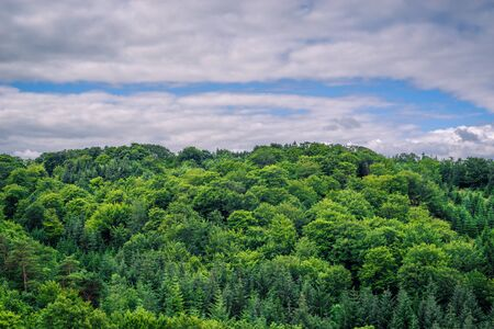 lightnings: Green trees in cloudy weather in danish nature Stock Photo