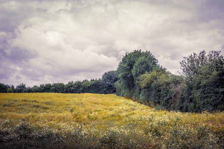 Field with chamomile flowers and trees in cloudy weather