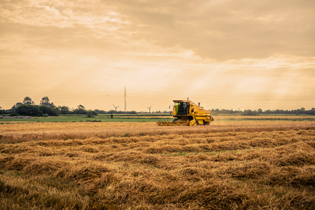 crop harvest: Yellow harvester machine on a field in the summertime