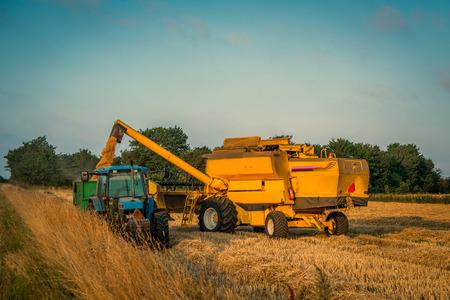 harvest: Harvester loading grain on a truck in the late summer