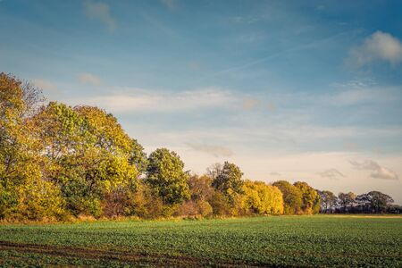 colorful tree: Colorful tree by a field in the fall