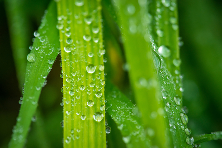 Grass after the rain with raindrops