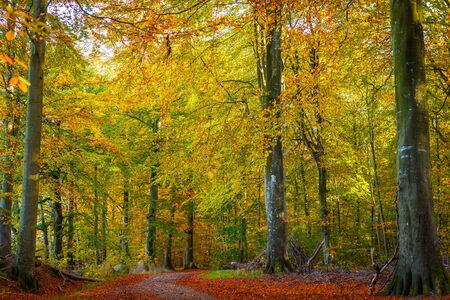colores calidos: Trees in a forest with warm colors in the fall