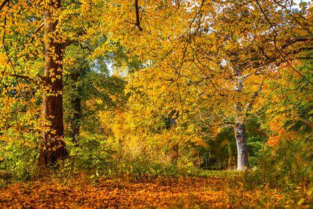colores calidos: Los �rboles en hermosos colores c�lidos en el oto�o
