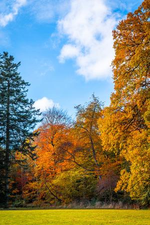colores calidos: Parque con árboles de colores en colores cálidos en el otoño