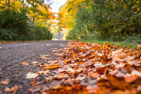 colores calidos: Hojas de arce en colores cálidos por la carretera