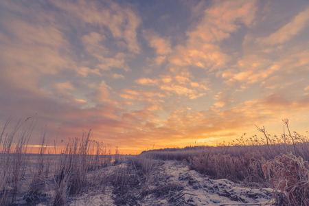 sunset clouds: Frozen grass at the sea shore in the sunrise