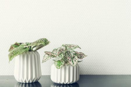 Flower pots with green plants on a black shelf