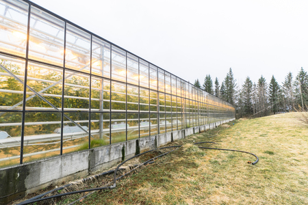 many windows: Large greenhouse with green plants with many windows Stock Photo
