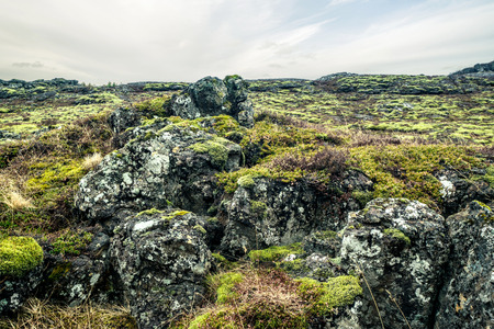 lava field: Moss on a lava field in iceland in cloudy weather