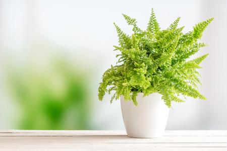 木製テーブルの上の白い植木鉢のシダ