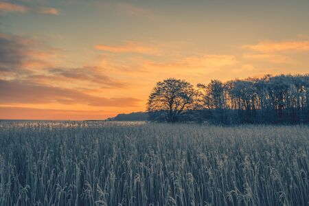 january sunrise: Tree silhouettes in the winter sunrise on a cold morning Stock Photo