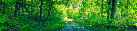 Dirt road in a green forest panorama in the spring Stock Photo - 56945402