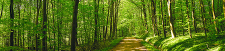 Road in a green forest panorama scenery in the spring