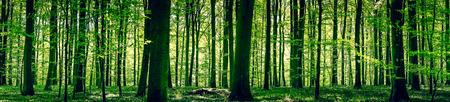 봄 날 파노라마 풍경 목가적 인 숲 스톡 콘텐츠